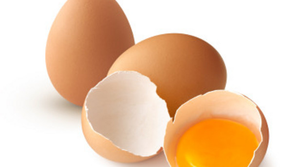 Image result for egg shell