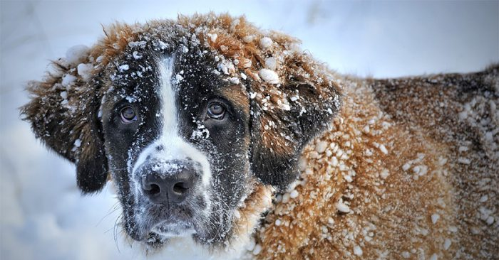 New Law Makes It Illegal To Leave Your Dog Outside In Cold Weather